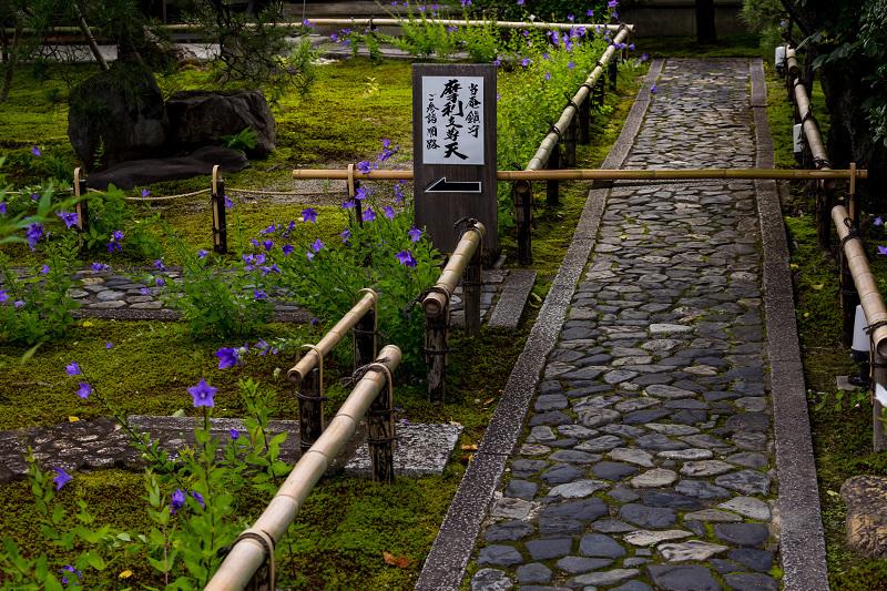 禅居庵の桔梗たち_f0155048_23084402.jpg