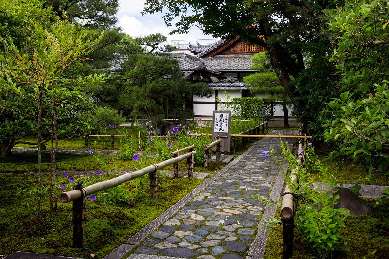 禅居庵の桔梗たち_f0155048_23085344.jpg