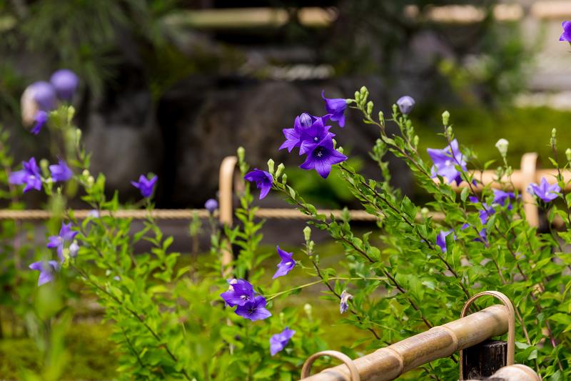 禅居庵の桔梗たち_f0155048_23085726.jpg
