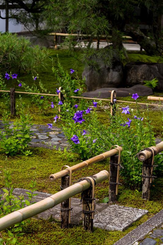 禅居庵の桔梗たち_f0155048_23090546.jpg