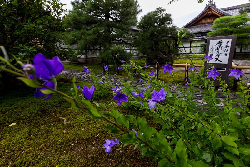 禅居庵の桔梗たち_f0155048_23092129.jpg