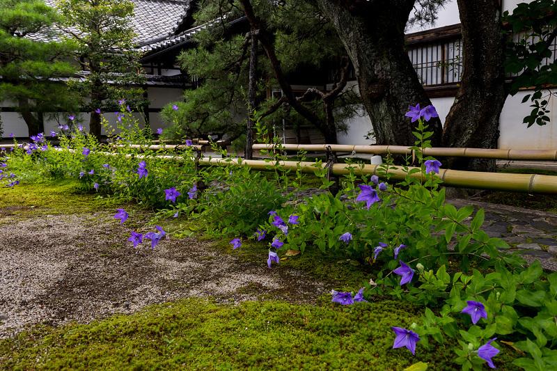 禅居庵の桔梗たち_f0155048_23094132.jpg