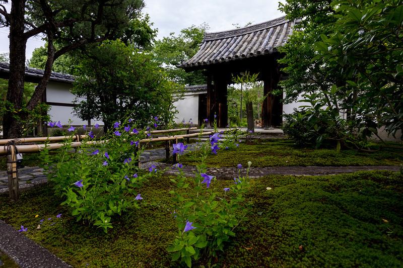 禅居庵の桔梗たち_f0155048_23100200.jpg