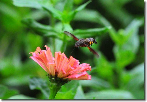 9月の庭_d0089358_23312807.jpg