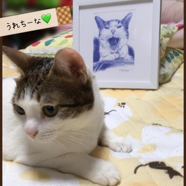 茶太郎くんと茶次郎くん マスク猫_f0375804_18383403.jpg