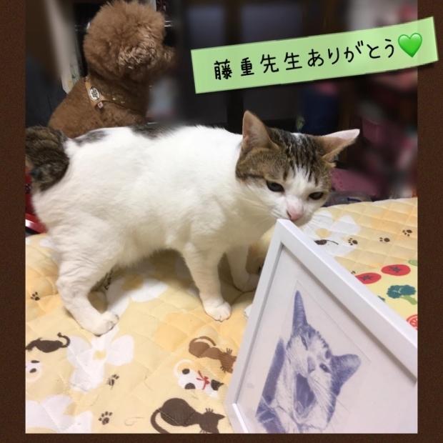 茶太郎くんと茶次郎くん マスク猫_f0375804_18383514.jpg