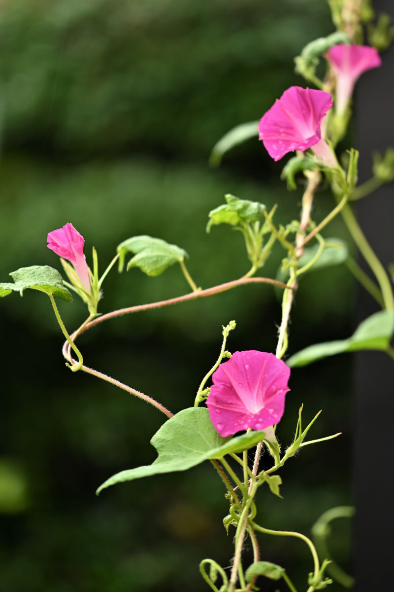 庭の花_a0347635_07580464.jpg