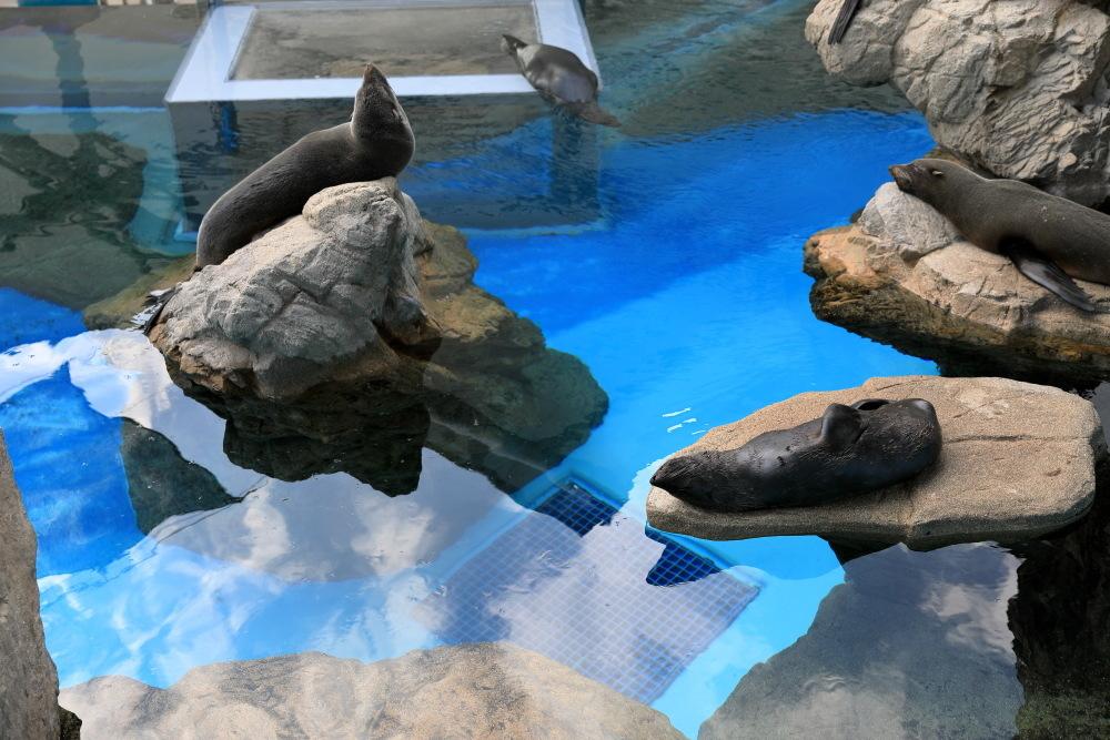 京都水族館 その3 アザラシ_b0325840_22505435.jpg