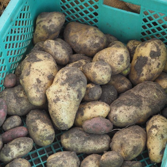 シンシアの収穫_f0400078_10375680.jpg