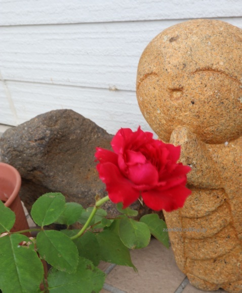 秋バラとアゲハの幼虫_a0304423_23385253.jpg
