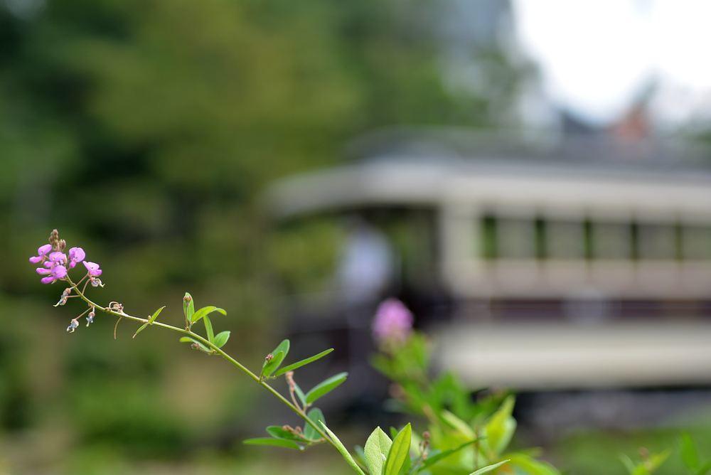 京都市電とハギの花_e0373930_18532174.jpg