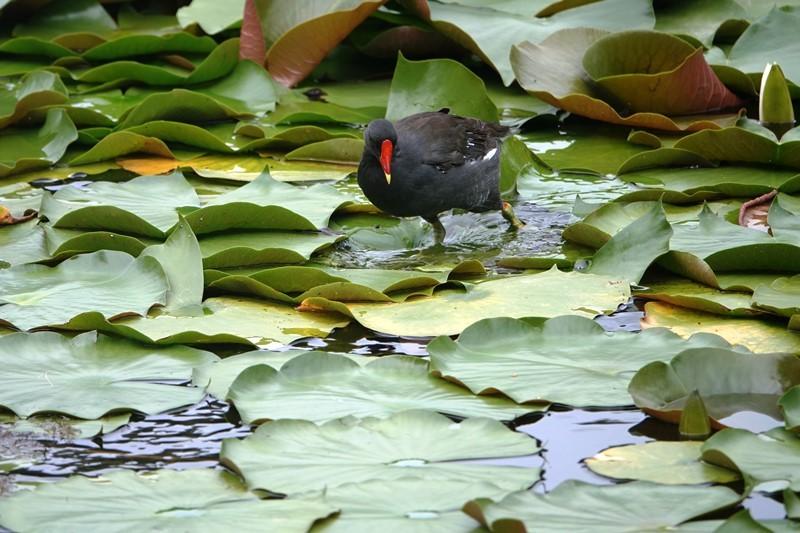 野鳥トレ269 淡路島公園等_b0227552_18462262.jpg