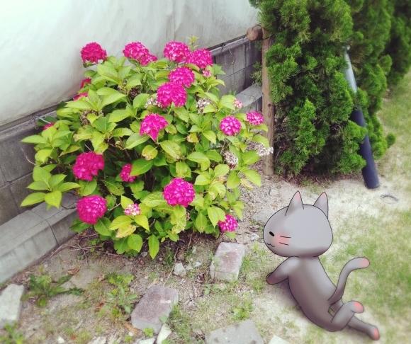 Twitter写真絵日記まとめ⑪_a0201203_14462604.jpg