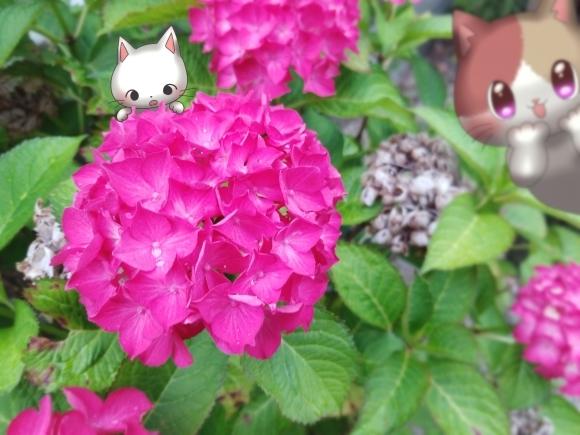 Twitter写真絵日記まとめ⑪_a0201203_14464081.jpg