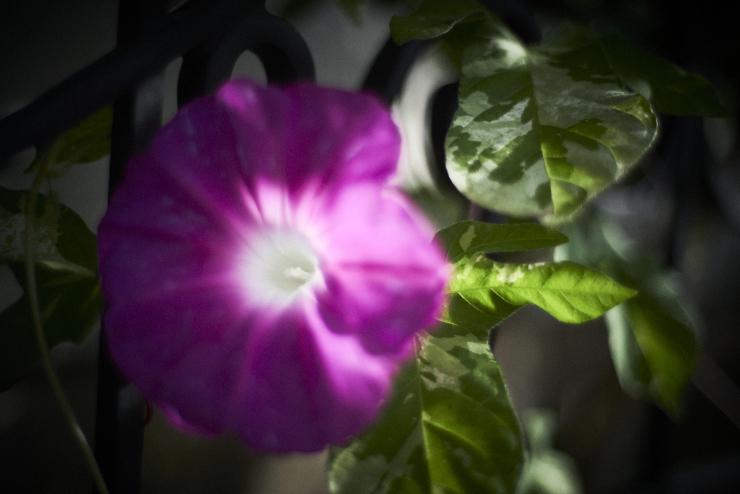 flowers(3cut)_e0342136_23254164.jpg