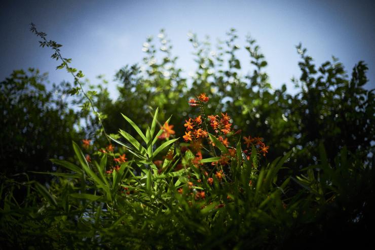 flowers(3cut)_e0342136_23274405.jpg
