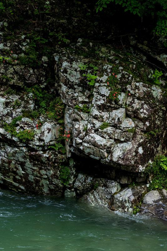 天川村の岩躑躅(川サツキ)_f0155048_23481519.jpg
