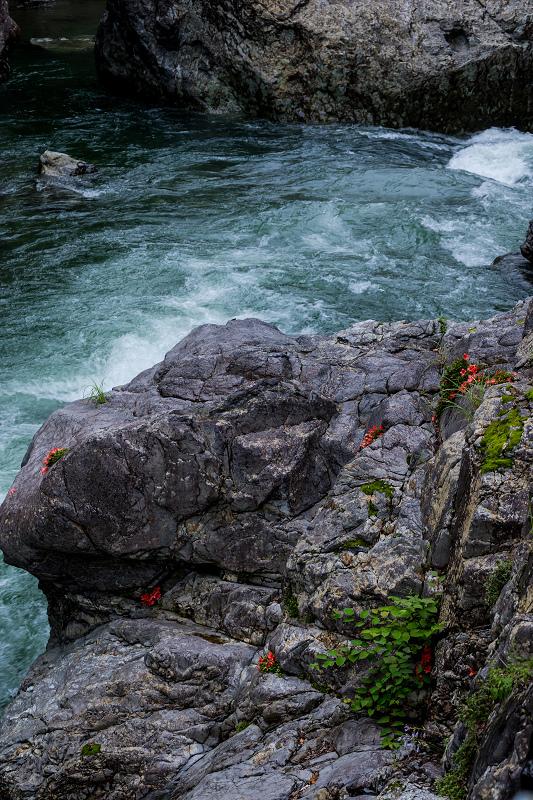 天川村の岩躑躅(川サツキ)_f0155048_23501500.jpg