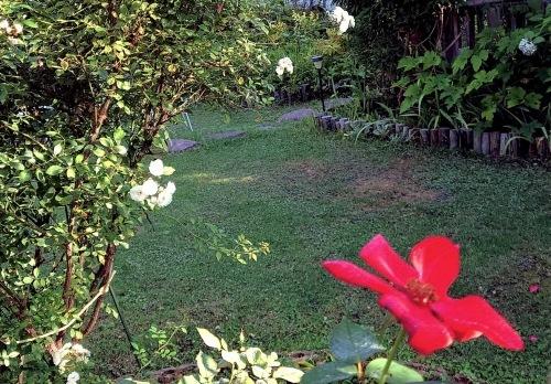 806、白露、秋の庭に花ふたたび_e0323652_15551343.jpg