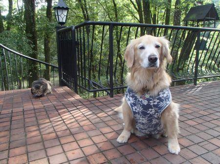 大型犬初体験の元次_f0064906_07172027.jpg