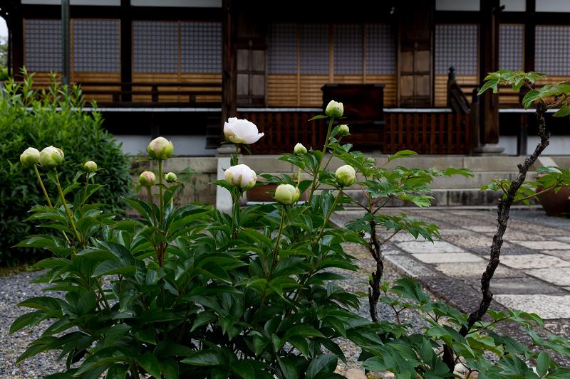 2021桜咲く京都 晩春・本満寺_f0155048_23023416.jpg