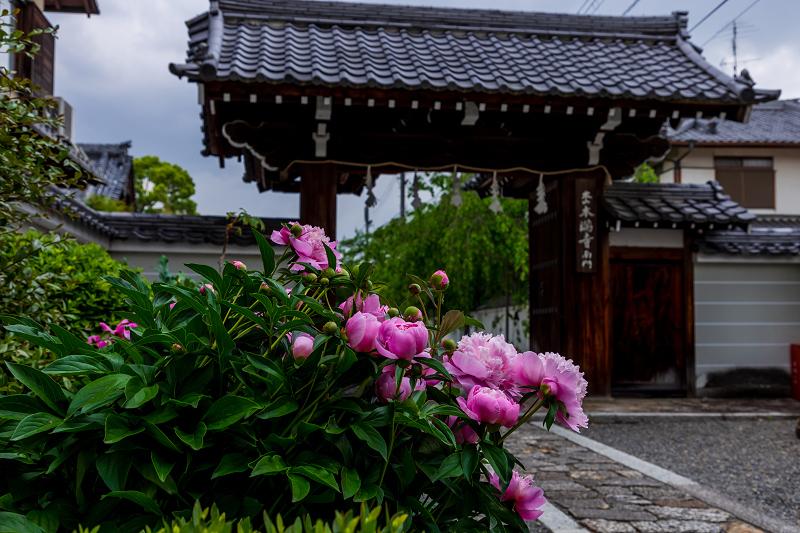 2021桜咲く京都 晩春・本満寺_f0155048_23024494.jpg