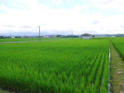 無農薬栽培の『雑穀米』『発芽玄米』大好評販売中!命みなぎる美味しいお米に元気な花が咲きました(2021)_a0254656_17391639.jpg