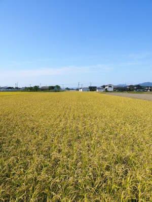 無農薬栽培の『雑穀米』『発芽玄米』大好評販売中!命みなぎる美味しいお米に元気な花が咲きました(2021)_a0254656_17533288.jpg