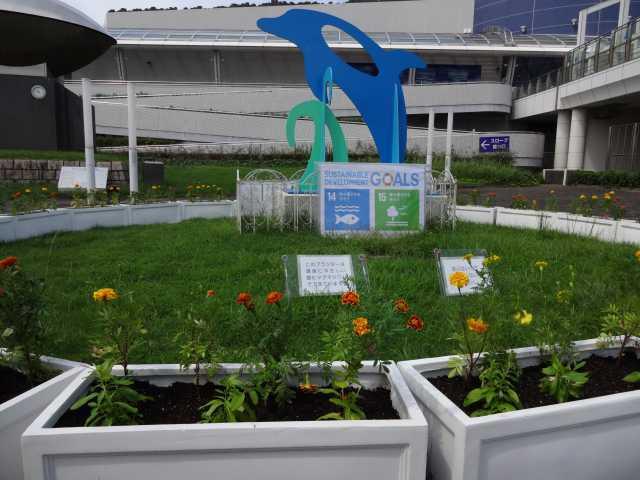 名古屋港水族館前のプランター花壇の植栽R3.9.7_d0338682_11014730.jpg
