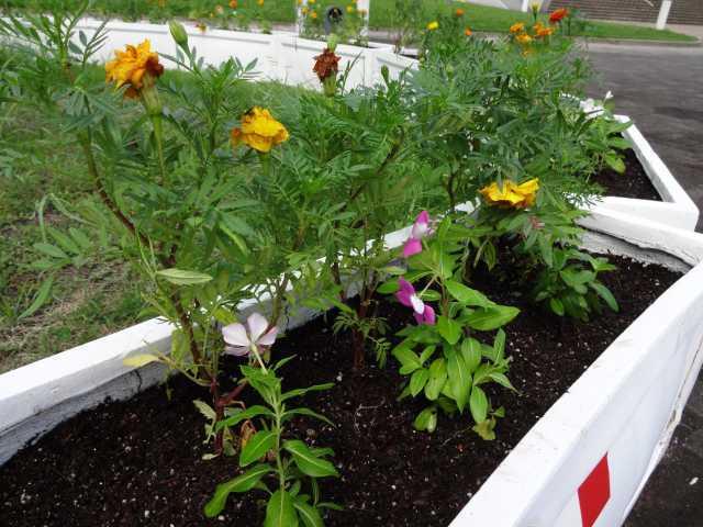 名古屋港水族館前のプランター花壇の植栽R3.9.7_d0338682_11054799.jpg