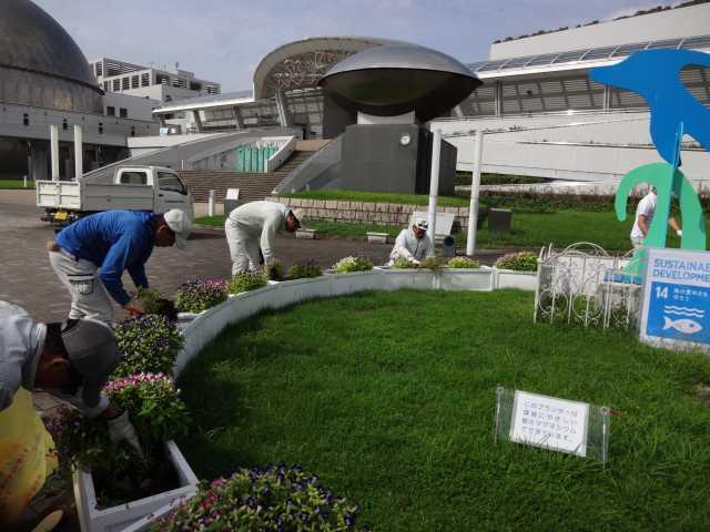 名古屋港水族館前のプランター花壇の植栽R3.9.7_d0338682_11091397.jpg