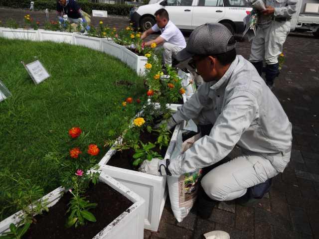 名古屋港水族館前のプランター花壇の植栽R3.9.7_d0338682_11100357.jpg