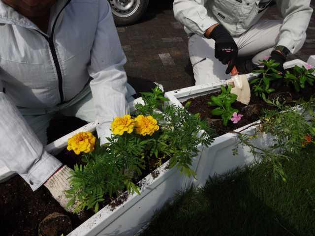 名古屋港水族館前のプランター花壇の植栽R3.9.7_d0338682_11101727.jpg