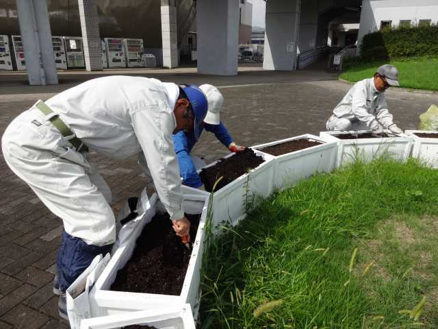 名古屋港水族館前のプランター花壇の植栽R3.9.7_d0338682_11131801.jpg