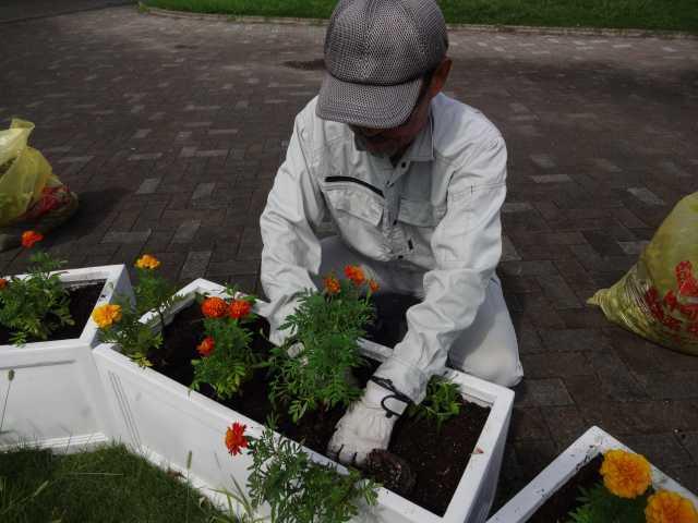名古屋港水族館前のプランター花壇の植栽R3.9.7_d0338682_11133416.jpg
