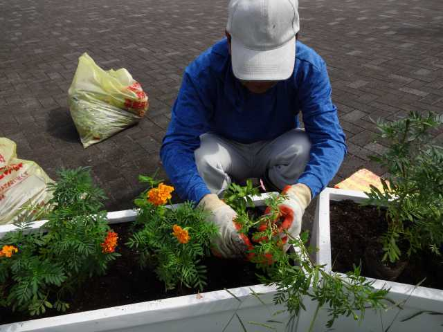 名古屋港水族館前のプランター花壇の植栽R3.9.7_d0338682_11225839.jpg