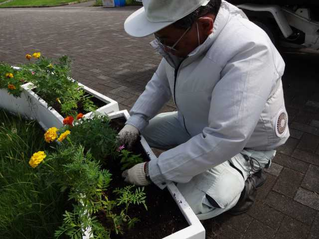名古屋港水族館前のプランター花壇の植栽R3.9.7_d0338682_11243453.jpg