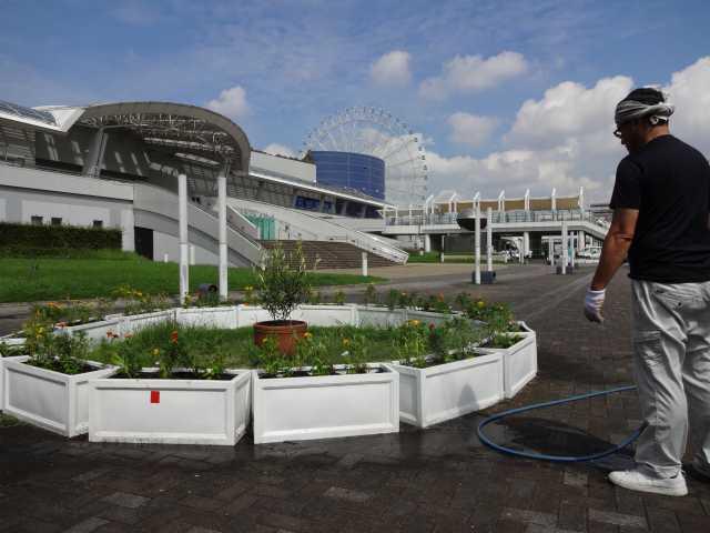 名古屋港水族館前のプランター花壇の植栽R3.9.7_d0338682_11245346.jpg