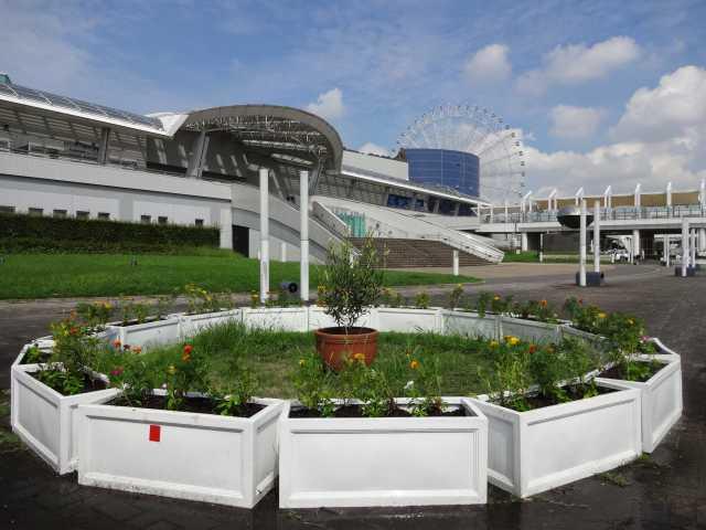 名古屋港水族館前のプランター花壇の植栽R3.9.7_d0338682_11253349.jpg