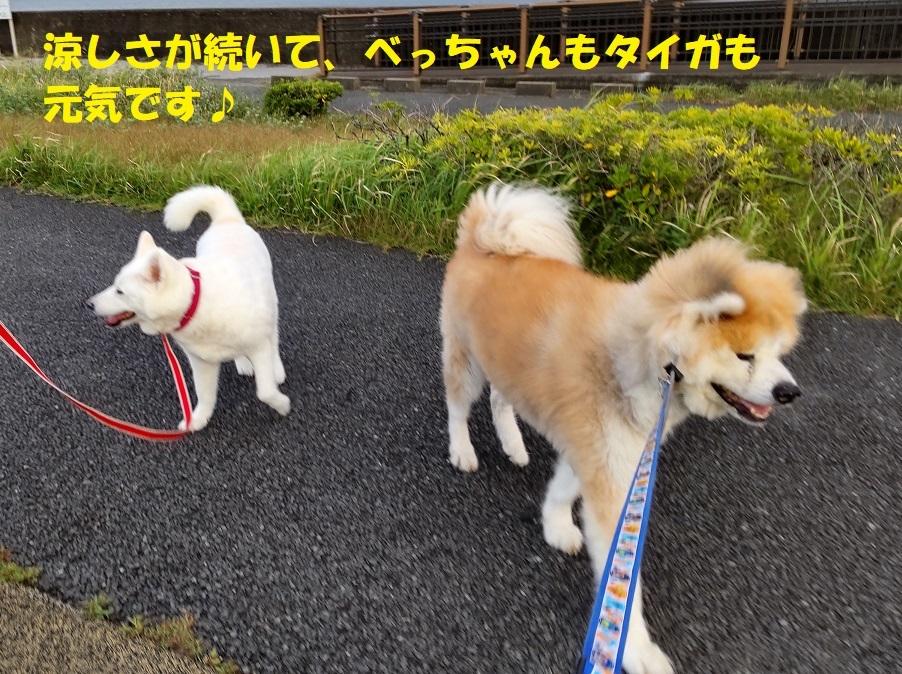カユミとニオイの元凶発見!!_f0121712_11520894.jpg
