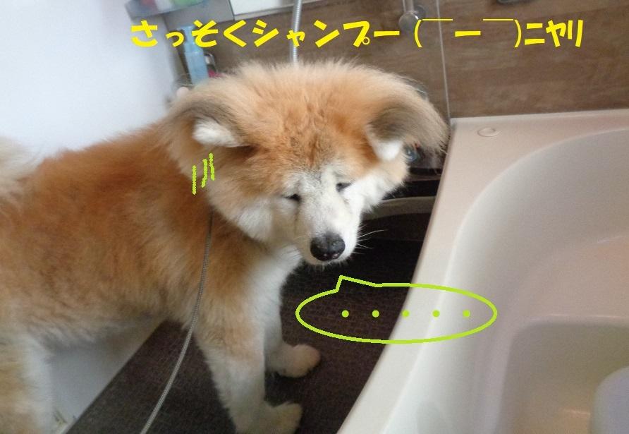 カユミとニオイの元凶発見!!_f0121712_12080863.jpg