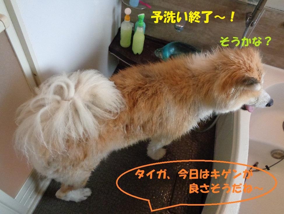 カユミとニオイの元凶発見!!_f0121712_12185317.jpg
