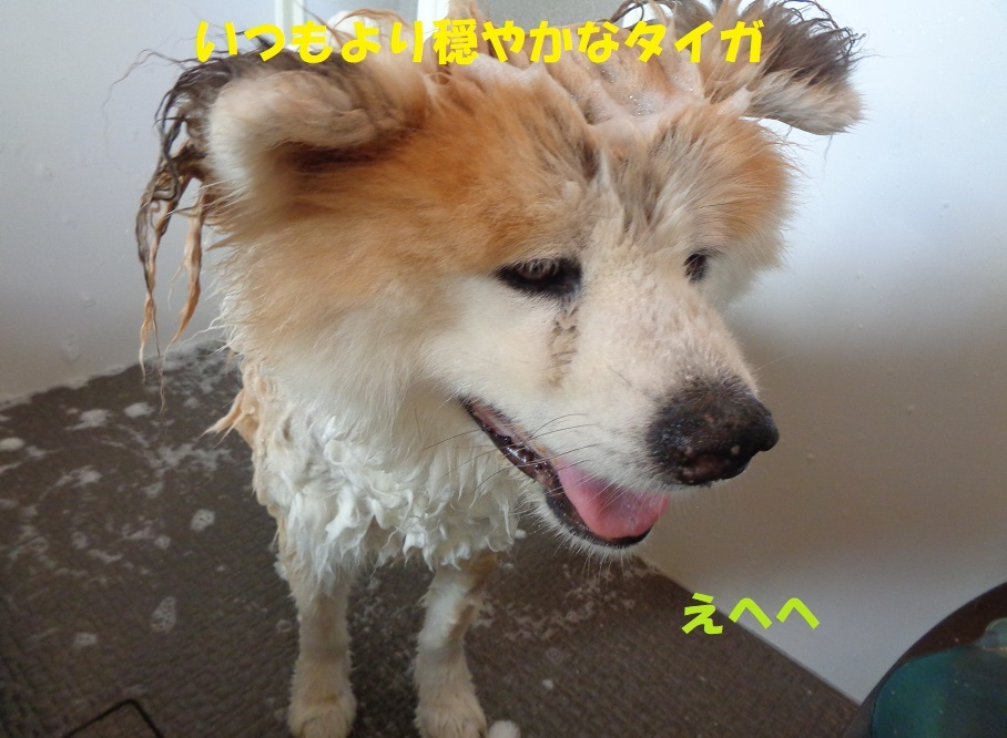 カユミとニオイの元凶発見!!_f0121712_12195049.jpg