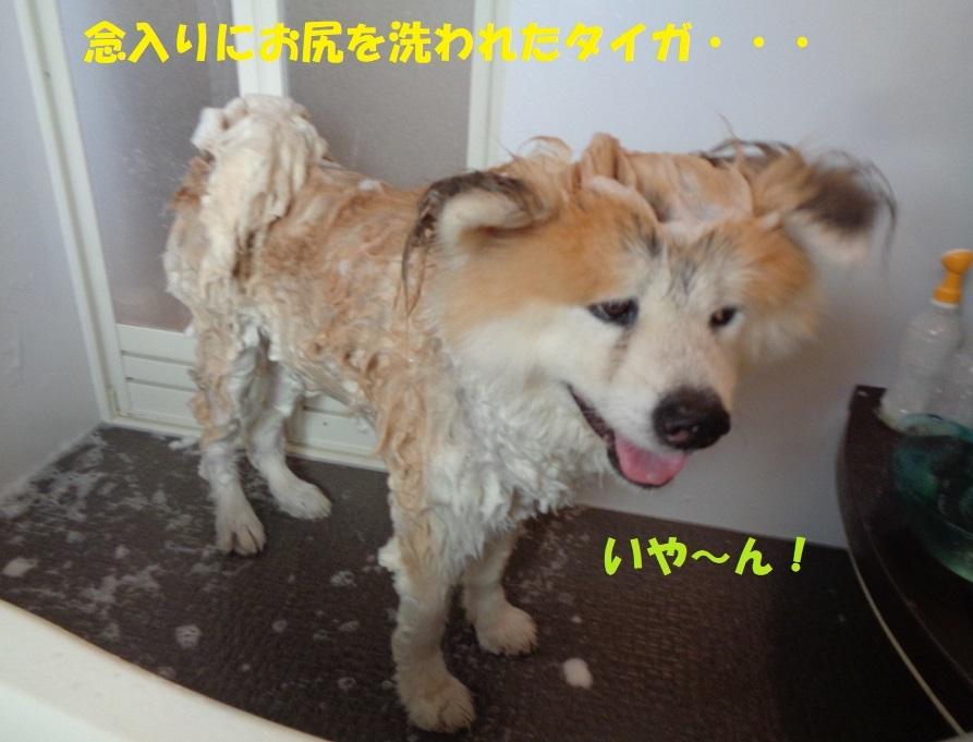 カユミとニオイの元凶発見!!_f0121712_13485055.jpg