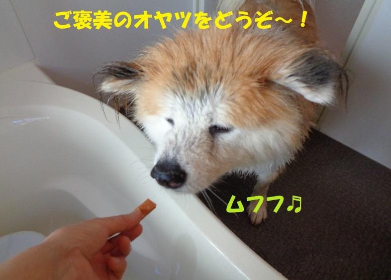 カユミとニオイの元凶発見!!_f0121712_13575940.jpg