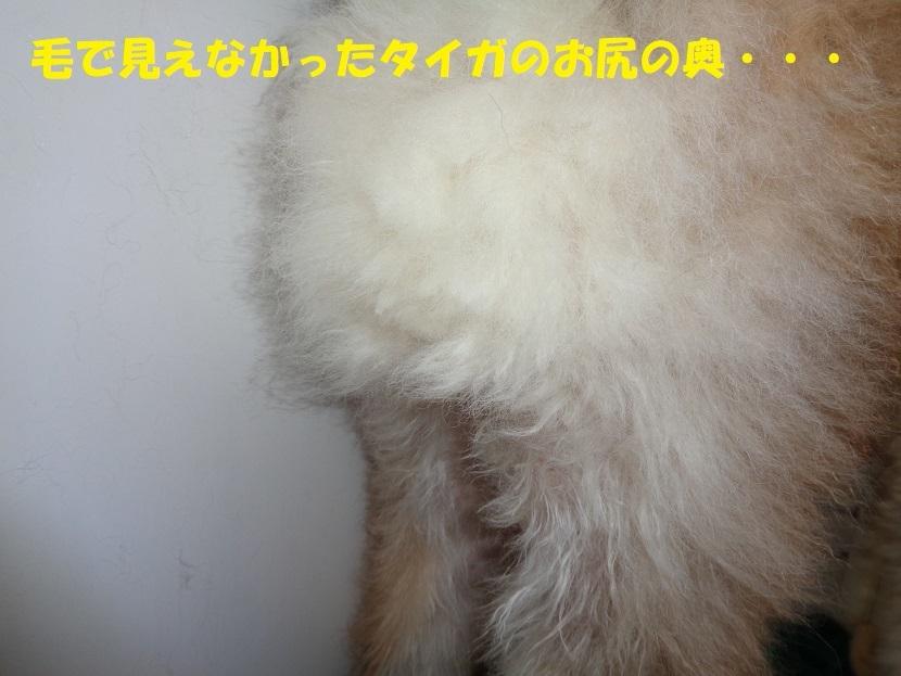 カユミとニオイの元凶発見!!_f0121712_14025446.jpg