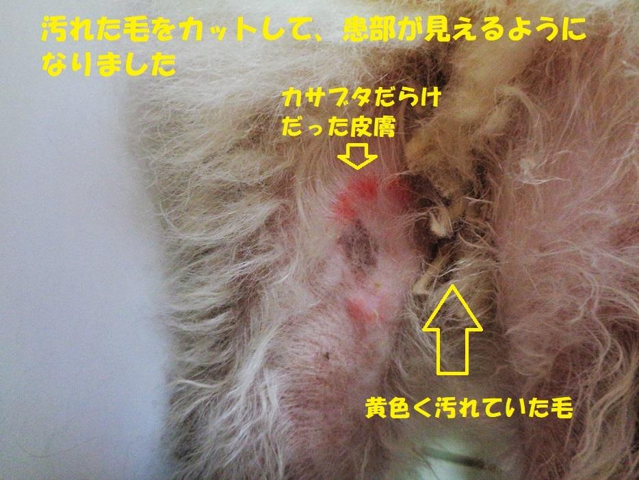カユミとニオイの元凶発見!!_f0121712_14062947.jpg