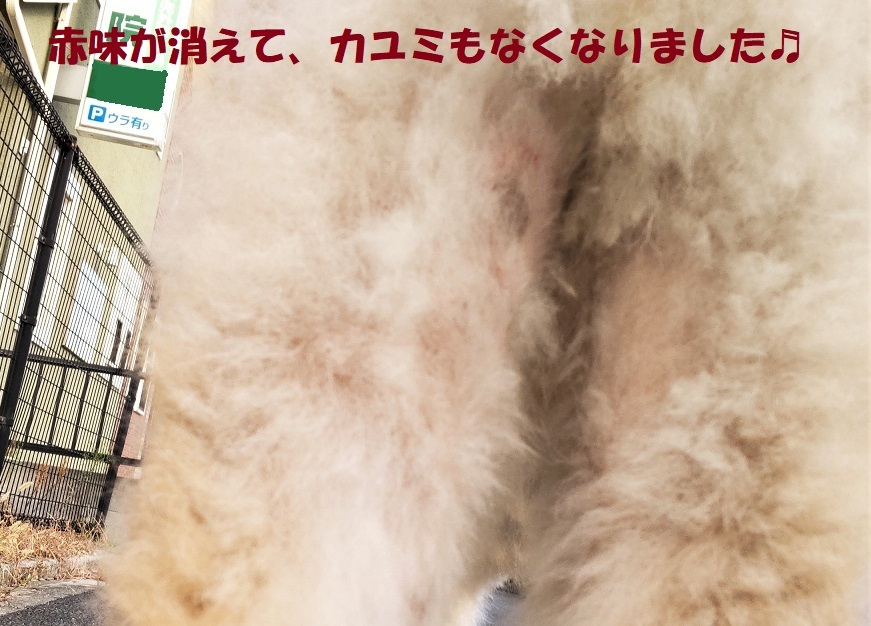 カユミとニオイの元凶発見!!_f0121712_14364814.jpg