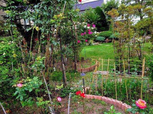 806、白露、秋の庭に花ふたたび_e0323652_15334031.jpg