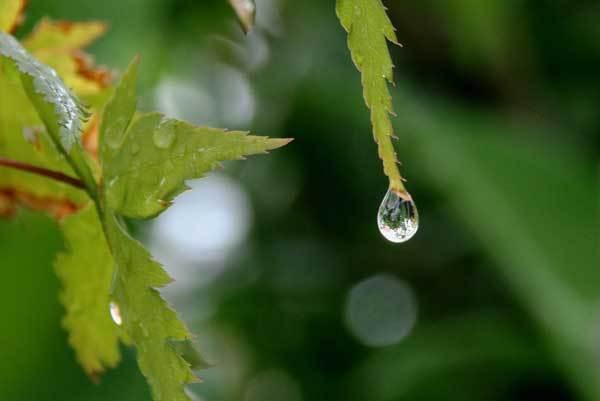 雨の雫_c0404426_16043124.jpg